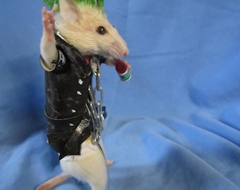 taxidermie rat punk taxidermy rat punk cabinet de  curiosité oditties