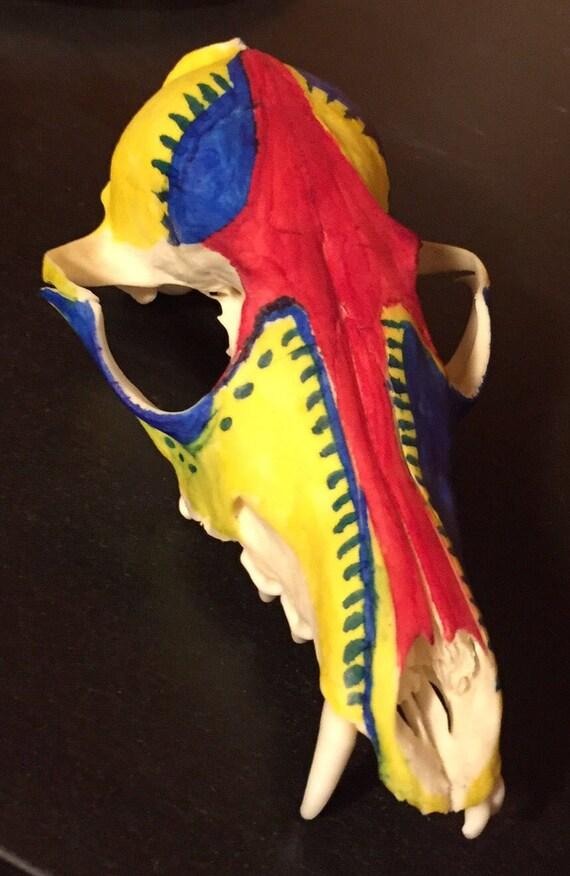 Painted Fox Skull