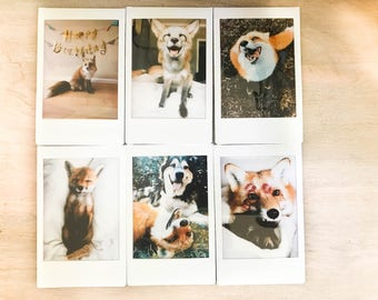 Collectable Small Polaroids