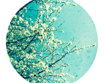 Blossom. Circle photo print. Signed ttv nature, floral, still life photograph. White cherry blossom against a blue sky. Spring decor.