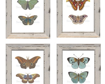 Hand Painted Butterfly Prints From Old Butterfly Engravings. Prints from Watercolors. Bedroom Makeover Cottage Garden Butterfly Art Print