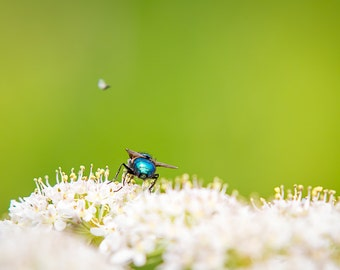 Fly By, nature, fine art photography, green, wall art