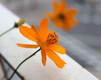 Flower wall art, Orange wall art, flower photography, Nature art, flower print, Orange wall decor, Fine Art Photography