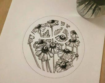 Drawing original Chamomile flower
