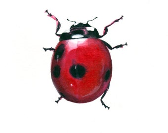 "Red Ladybug art print - Seven Spotted Lady Beetle, 8.5"" x 11""."