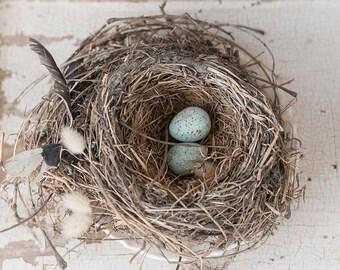 nest in spring -nest photography springtime photo-garden photography -birds nest - Original fine art photography prints - FREE Shipping