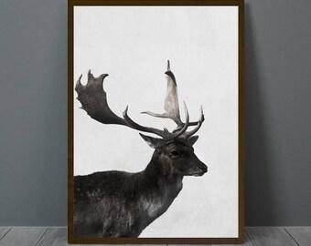 Deer Print, Deer Wall Decor, Deer Poster, Deer, Animal Print, Printable Deer, Wall Art Deer