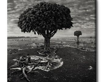 "Giclee Canvas Wall Art ""Trees"" by Dariusz Klimczak"