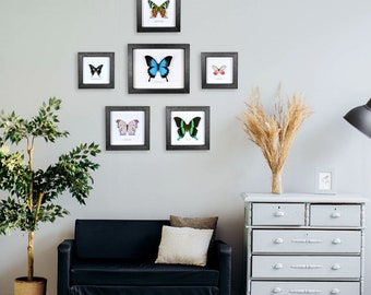 "Minibeast Best Sellers Entomology Wall Display - ""Lounge"""