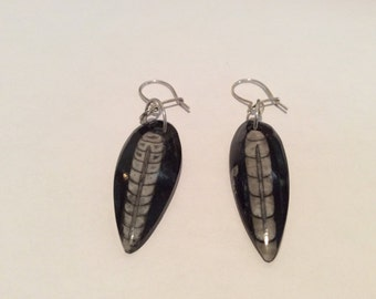 2 3/8 inch Orthoceras fossil earrings Goth prehistoric Cephalopod stone, Made in USA