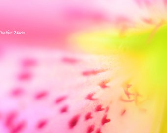 Abstract of a Lily Flower part 1, fine art photography