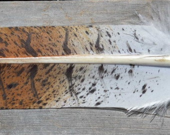 Imitation Red Tail Hawk Feather