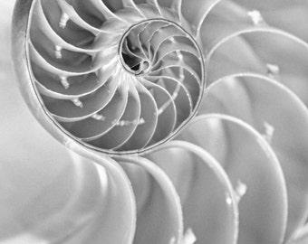 "Nautilus Shell Print - black and white nautilus photography 5x7 8x10 photo ocean seashell wall art 11x14 bathroom decor 24x36 ""Golden Ratio"""