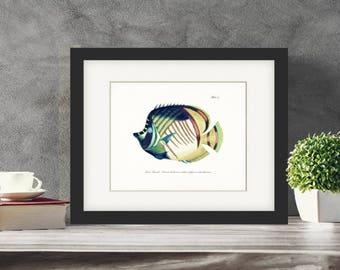 Vintage Fanciful Fish Natural History Art Print - Plate ix