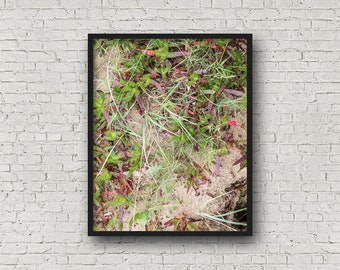 Strand Gräser Print / Digital Download / Fine-Art Print / Kunst / Home Decor / Farbe Fotografie / Strand Natur-Druck / Naturfotografie