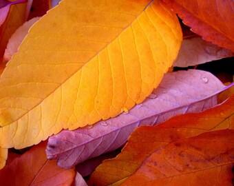 Fall leaves photo, colorful fall leaf art, cabin decor, rustic wall art, autumn nature photo, Colorado art, log home decor | Autumn Bright
