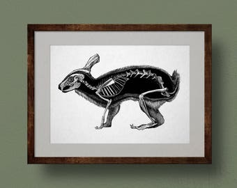 Rabbit Skeleton Anatomy Print, from Original Ink Drawing. Scientific Illustration, Zoology, Bones, Life Science, Biology, Wall Art, Gift.