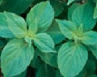 Basil Herb Plant, Mrs. Burn's Lemon Organic