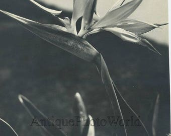Flower close up antique art photo
