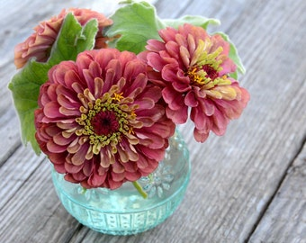 Queen Red Lime Zinnia Seeds, Pink Zinnias, Great for Butterfly Gardens and Cutting Gardens