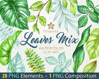 Wild forest leaves WATERCOLOR Clip Art. Fresh spring foliage, jungle nature, exotic garden, palm monstera. 20 png elements + 1 composition