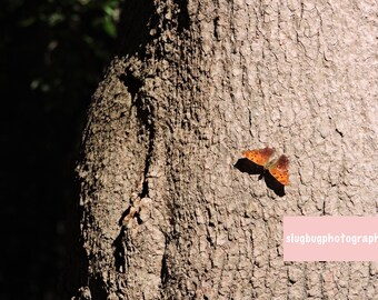 Orange Butterfly on Tree Photograph