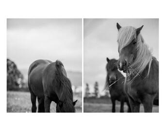 Horse print set - Fine art Iceland photography - Farm country photos - Black and white wall art - Modern baby nursery art - Photo gift mom