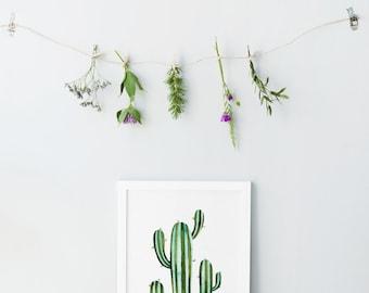 Cactus print - Printable cactus art - Botanical prints - Cactus poster - Watercolor prints - Cactus wall art - Digital art - Cactus flowers