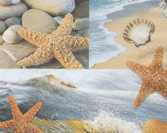 Star of sea shells and 1 lunch size paper towel 220