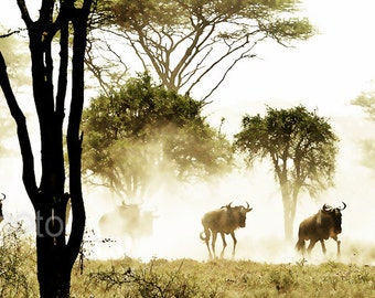 "Wildlife Photography, African Safari Serengeti, ""Running of the Wildebeests""  fine Art Print"