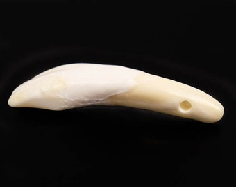 One hundred (100) Drilled Genuine Water Buffalo Teeth (174-100)