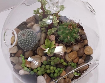 Succulent Plant Glass Globe Terrarium DIY Complete Kit with 2 Small Cacti and 2 Small Succulent Plants.