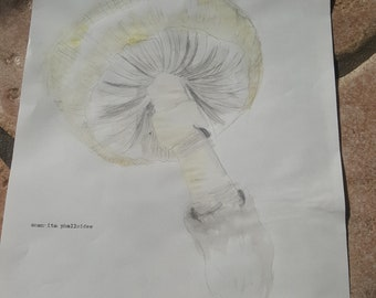 Amnita phalloides watercolor