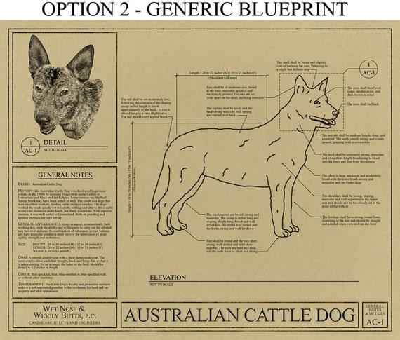 Personalized australian cattle dog blueprint australian personalized australian cattle dog blueprint australian cattle dog art australian cattle dog gift australian cattle dog print malvernweather Gallery