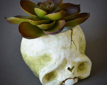 Skull planter with faux succulent 2