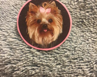Picture Perfect Yorkie