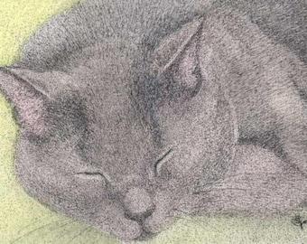 ACEO ATC Graydon Gray Grey Sleeping Cat Kitty Art Card