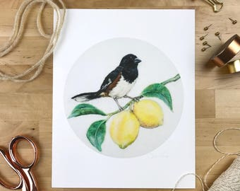 Towhee & Lemons - 8 x 10 Giclee Print - Orchard Birds 001