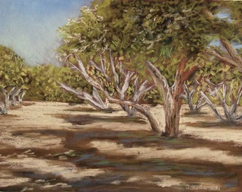 Arizona Orchard original Pastel Painting Sahuaro Ranch Park Glendale AZ 9x12 inch FREE SHIPPING