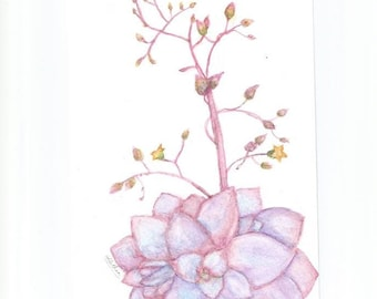 Original Watercolor Plant Painting - Blue, Purple, and Pink Flowering Echeveria Succulent