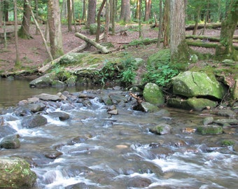 Creek through the Woods Photo