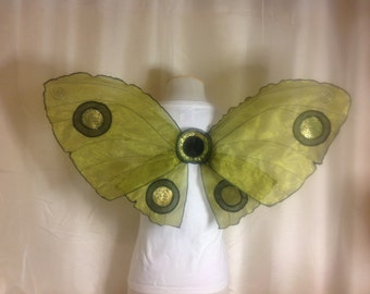 Beautiful Unique Fairy Moth Wings