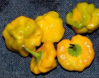 Jamaica Yellow mushroom Hot Peppers(Capsicum annuum) Fresh Organic Seeds, Heirloom From My Native Island, JAMAICA