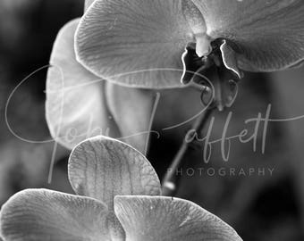 Black and White Orchid Digital Print