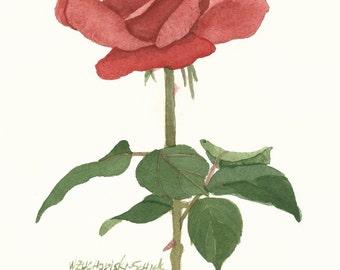 Red Rose Original Watercolor Painting