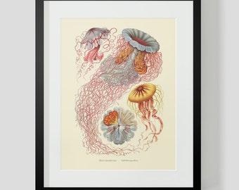 Vintage Ocean Life Jellyfish Print