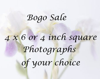 4 x 4 or 4 x 6  Prints, Photographs of Your Choice, Bogo Sale