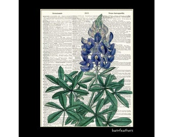 Vintage Dictionary Art Print - Bluebonnet Flower - Gardening - Dictionary Page - Book Art Print  - Home Decor No. P483