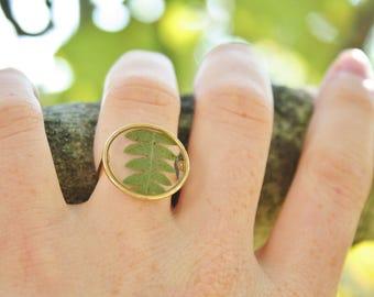 US size 7 only / Pressed fern ring Geometrical ring Circle ring Gold plated 16K O shape ring Fern ring Terrarium Botanical Resin ring Plants