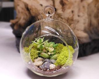 Floralistic terrariums glass orchids diy kits moss by floralistic floralistic all inclusive do it yourself diy terrarium kit supplies solutioingenieria Image collections